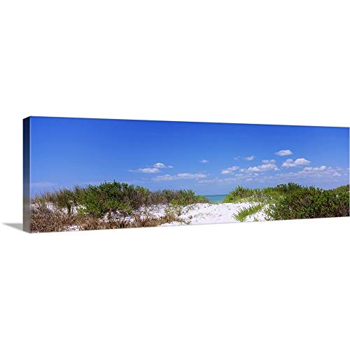 GREATBIGCANVAS Gallery-Wrapped Canvas Entitled Plants Growing on The Beach, Fort De Soto Park, Tierra Verde, Gulf of Mexico, Florida by 48