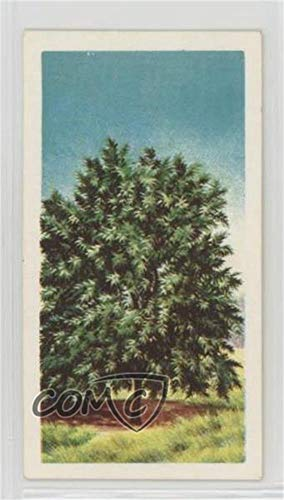 Spindle Tree (Trading Card) 1966 Brooke Bond Trees in Britain - Tea [Base] #19