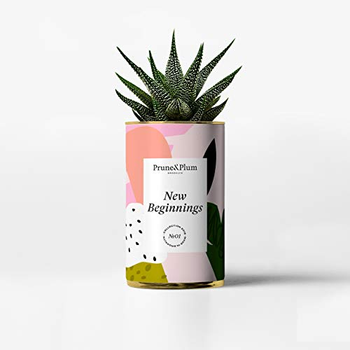 Succulent Rosa + New Beginnings Planter by Prune & Plum