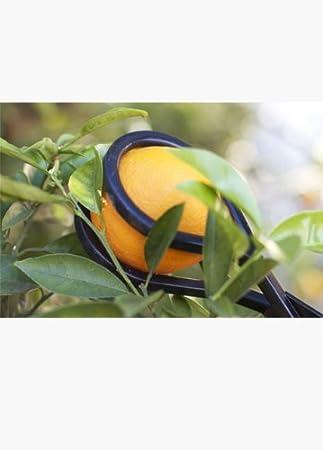 Amazon.com: Selector de la Twister Frutas: Jardín y Exteriores