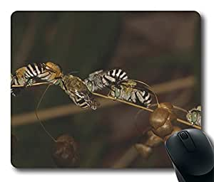 Blue Banded Bees Sleeping Cool Comfortable Gaming Mouse Pad