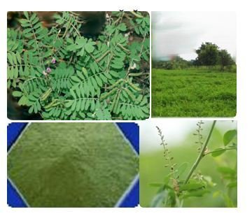 Etheric Organic Indigo Leaf Powder 250 Grams Buy