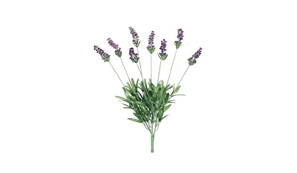 Amazon Com 19 Lavender Bush X8 Lavender Blue Pack Of 12 Home
