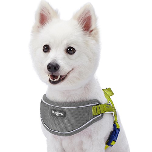- Blueberry Pet 5 Colors Soft & Comfy 3M Reflective Strips Padded Dog Harness Vest, Chest Girth 24.5