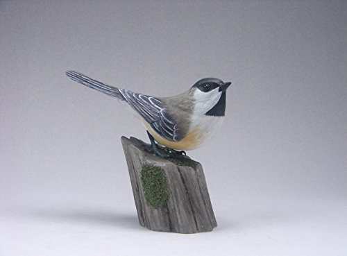 Black Capped Chickadee on Perch