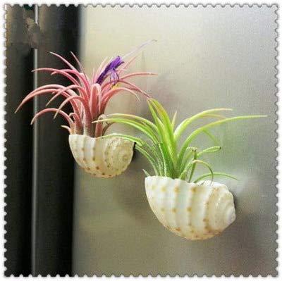 Shopvise 200 Pcs Cactus Bromeliad Rare Colorful Flower Plant Courtyard Mini Plant Succulent DIY Home Garden: 12