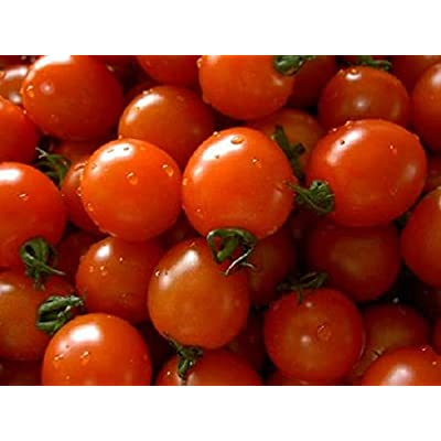 Organic Small Red Cherry Tomato Seeds 300 Heirloom Seeds Indeterminate : Garden & Outdoor