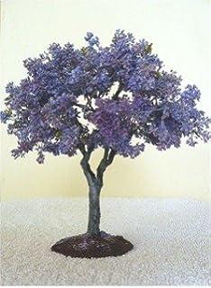 Palisanderholzbaum  Bonsai Anzuchtset - Saatausstattung zum pflanzen eines ...