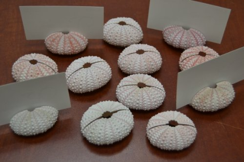 12 Pcs Pink Sea Shell Seashell Urchins Beach Wedding Card