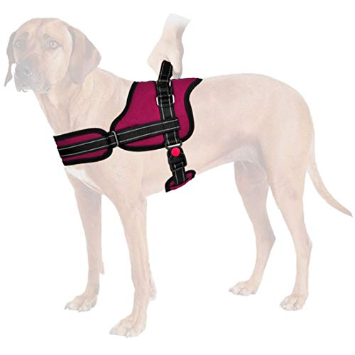 The Best Jump Restraint Dog Harness Of 2019 Top 10 Best