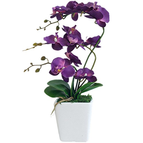 Orchid Phalaenopsis Flower (YSZL 15