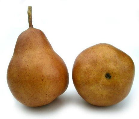 Artificial Brown/Bosc Bartlet Pear - Box 12 by BIC