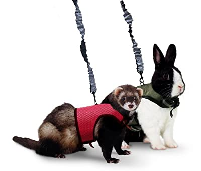 Kaytee Ferret Comfort Harness and Stretchy Leash by Super Pet
