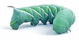 12 Live Hornworms by Manduca sexta