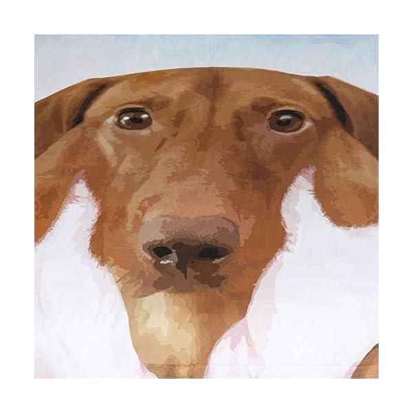 Loja Daschshund Online