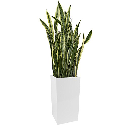 Kanto Carson Aluminum Indoor and Outdoor Planter, Large, White by Kanto