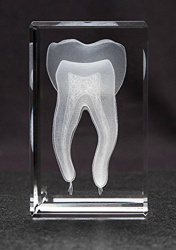 Anatomy Crystal (Tooth 1lb)