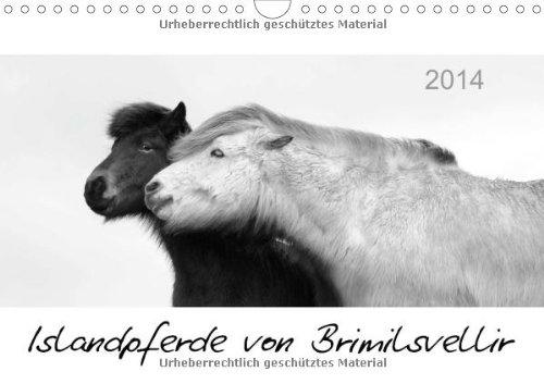 Islandpferde von Brimilsvellir (Wandkalender 2014 DIN A4 quer): Islandpferde von Brimilsvellir (Monatskalender, 14 Seiten)