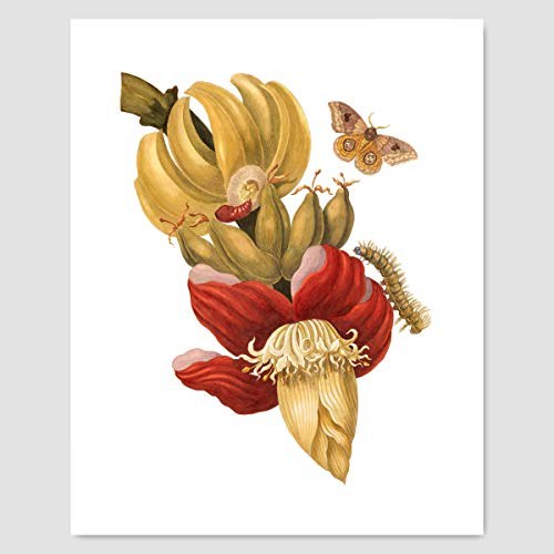 Art, Insect Print (Botanical Wall Decor)