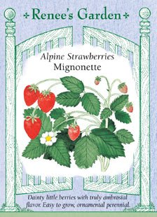 Strawberry, Alpine, Mignonette