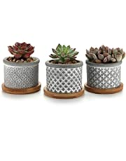 T4U 6CM Ceramic Succulent Planter Pots with Bamboo Saucers Mini Size Set of 3, Cute Owl Bonsai Pots Home and Office Decoration Desktop Windowsill Gift, for Gardener on the Birthday