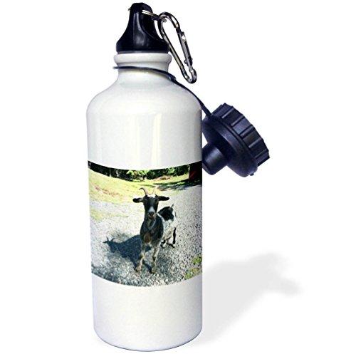 Price comparison product image 3dRose BrooklynMeme Farm Animals - Goat black - 21 oz Sports Water Bottle (wb_256635_1)