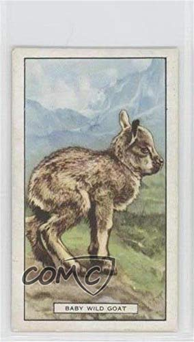 The Wild Goat (Trading Card) 1937 Gallaher Wild Animals - Tobacco [Base] #44 from Gallaher Wild Animals