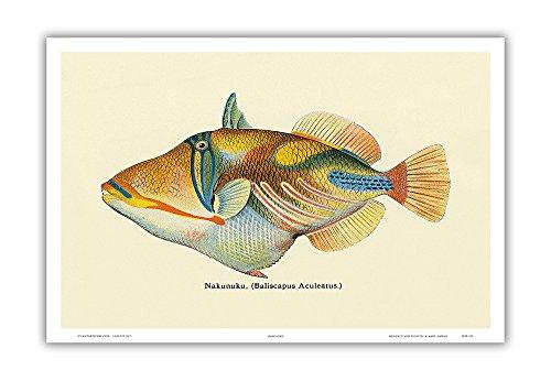 fish art prints - 6