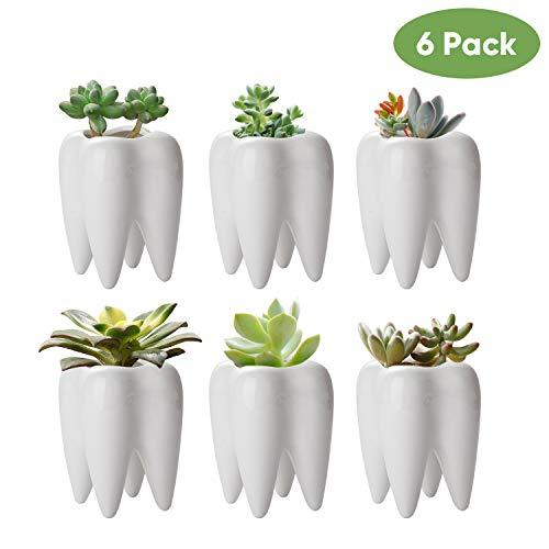 Tooth Shaped Planter Pots,Small Ceramic Succulent Pots,Cute White Cactus Planters,Mini Flower Plant Containers, Creative Pen Pencil Holder for Desk Decor(6 Pack)