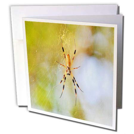 3dRose Dreamscapes by Leslie - Arachnids - Golden Silk orb Weaver Spider in Florida - 6 Greeting Cards with envelopes (gc_292254_1)