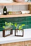 Mkono Wall Hanging Glass Planter Propagation