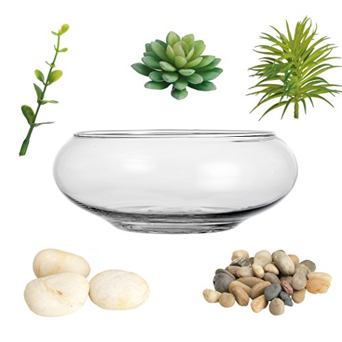 Clear Glass Terrarium Vase Planter Bowl With Succulents