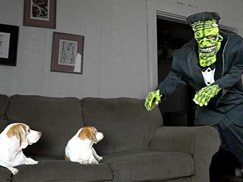 (Dogs Love Frankenstein Prank)