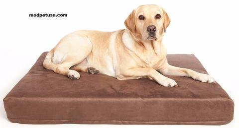 Mod Pet Advance Therapeutic Orthopedic Extra Large XL Memory Foam Dog Bed Sized for Small to Large Dogs. Enhanced Durable Cover FREE Water Resistant Liner. in USA.