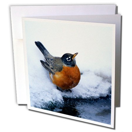 nt - Robin - American Robin at bird bath, water in winter - 12 Greeting Cards with envelopes (gc_250832_2) (Winter Greetings Bath)