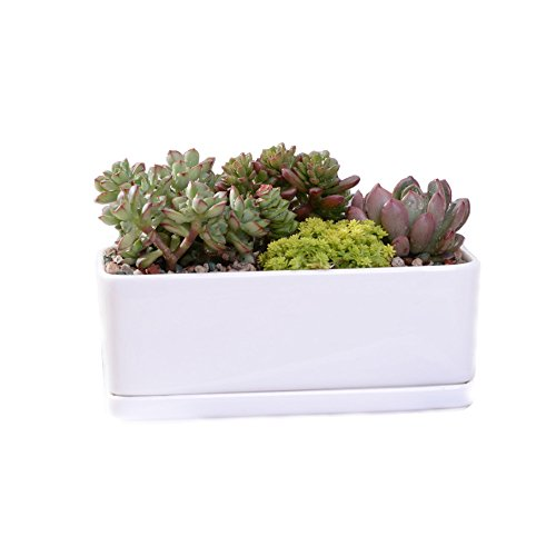 White Ceramic Rectangular Flower Pot,6.5 inch Modern Minimalist White Ceramic Succulent Planter Pot/Container with Ceramic Tray by Yousun