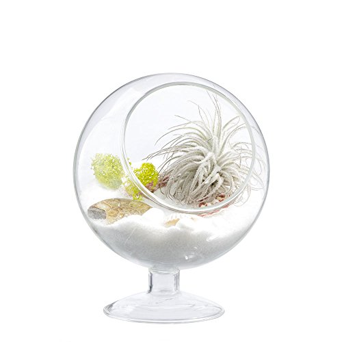 Mkono-Air-Plant-Terrarium-5-Inch-Succulent-Glass-Planter-Container-Plant-Display-Vase-with-Pedestal