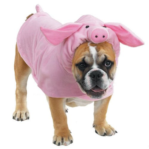 Casual Canine Piggy Pooch Pet Dog Halloween Costume (Pig Costume For Dogs)