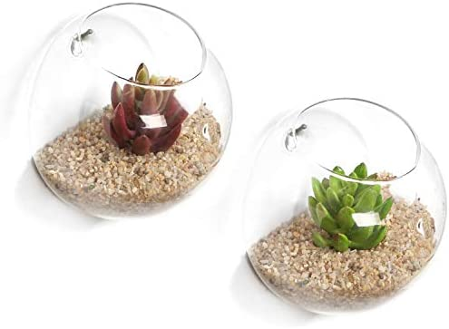 Set of 2 Wall Mounted Clear Glass Terrariums Air Plant Globes Hanging Candle Display Bowl Jars