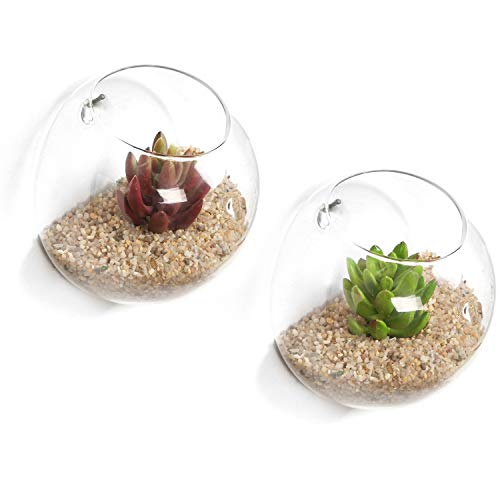 Set of 2 Wall Mounted Clear Glass Terrariums/Air Plant Globes/Hanging Candle Display Bowl Jars