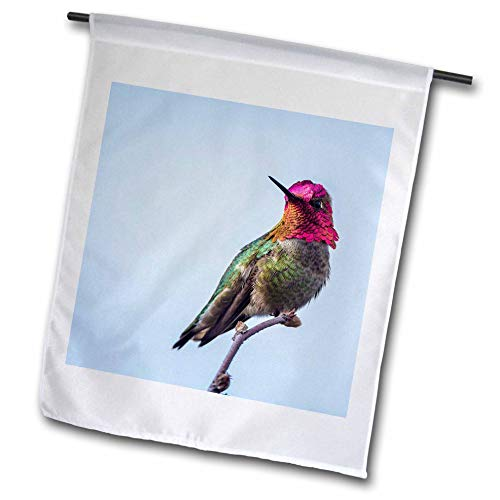 3dRose Danita Delimont - Hummingbirds - Adult Male Annas Hummingbird Flashes his Iridescent Gorget. - 12 x 18 inch Garden Flag (fl_315138_1)