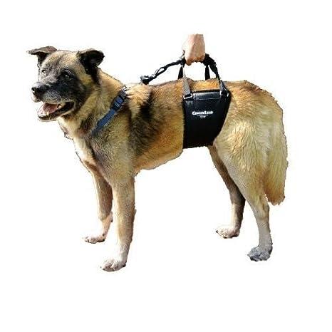 gingerlead perro soporte & Arnés de rehabilitación, tall macho por ...
