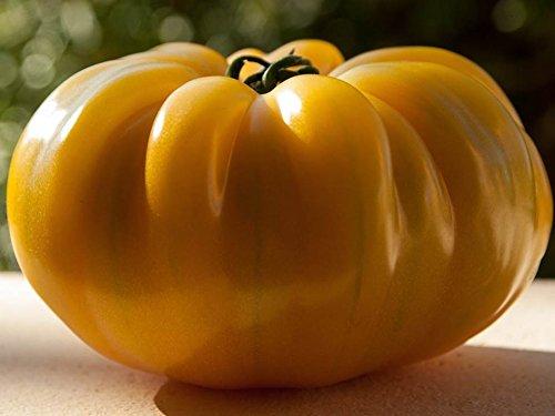 Old German Tomato Seeds Choose Packet Size Low Acid Heirloom Beefsteak Free bin225 (50 Seeds) ()