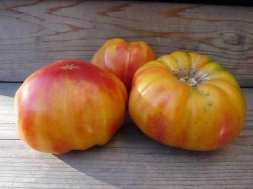 40+ Seeds: Tomato Seed: Old German Tomato Seeds Fresh Seed ()