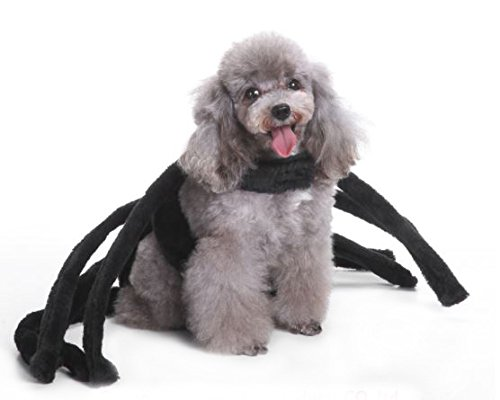 Black Widow Dog Costume by Midlee (Large) (Spider Costumes For Dogs)