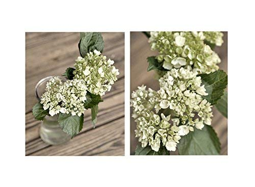 Amazon Com Green Hydrangea Flower Artwork French Country