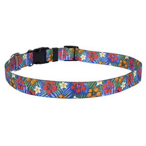 Yellow Dog Design Hibiscus Paradise Dog Collar 3/8