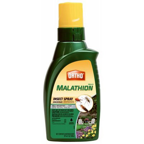 Ortho MAX Malathion Concentrate Insect Spray, 32-Ounce by Ortho