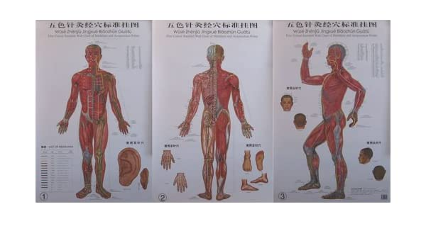 Human Body Meridians Poster Print Choose your size Unframed.