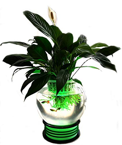 - Wireless LED Lighting Base + 1.2 Gallon Betta Fish Bowl + Plant Basket for Home Decoration in Any Room Great Gift IDEA